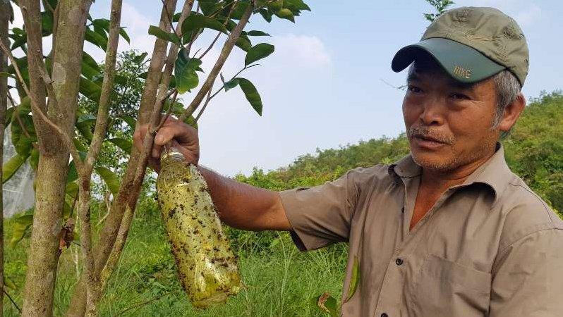 Chuyện lạ: Vườn cây chục tỷ đồng được mắc màn bảo vệ giữa rừng sâu-13