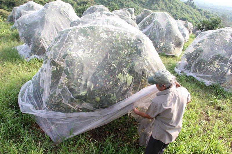 Chuyện lạ: Vườn cây chục tỷ đồng được mắc màn bảo vệ giữa rừng sâu-3