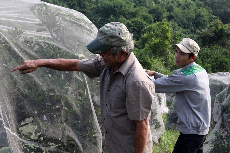 Chuyện lạ: Vườn cây chục tỷ đồng được mắc màn bảo vệ giữa rừng sâu-7