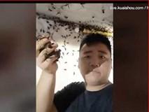 Dùng tay không vốc cả nắm ong bắp cày có thể đốt chết người