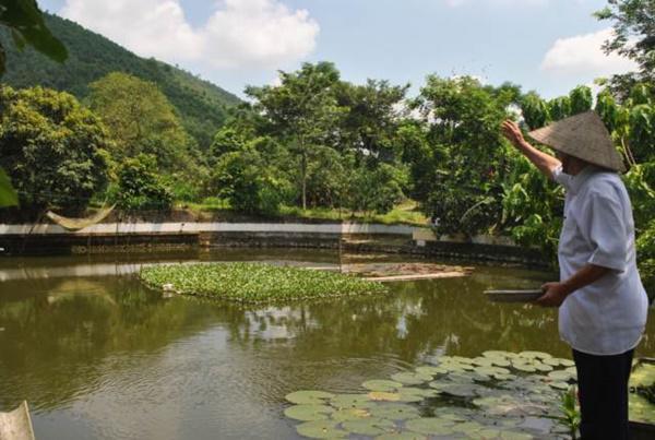 Cụ ông U80 trồng cây, nuôi cá thảnh thơi, vừa chơi vừa có tiền-2