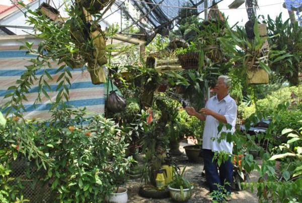 Cụ ông U80 trồng cây, nuôi cá thảnh thơi, vừa chơi vừa có tiền-4