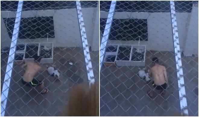 Phẫn nộ clip người đàn ông dùng roi vụt nhiều nhát vào chú chó nhỏ giữa sân nhà-1