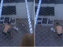 Phẫn nộ clip người đàn ông dùng roi vụt nhiều nhát vào chú chó nhỏ giữa sân nhà