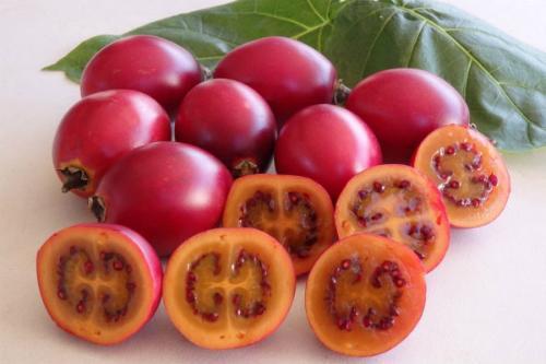 Xôn xao loại cà chua lạ có giá nửa triệu 1 kg-1