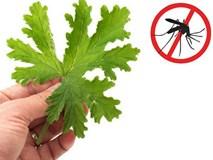 Biết những mẹo đuổi muỗi cực hay này, bạn khỏi lo mắc sốt xuất huyết