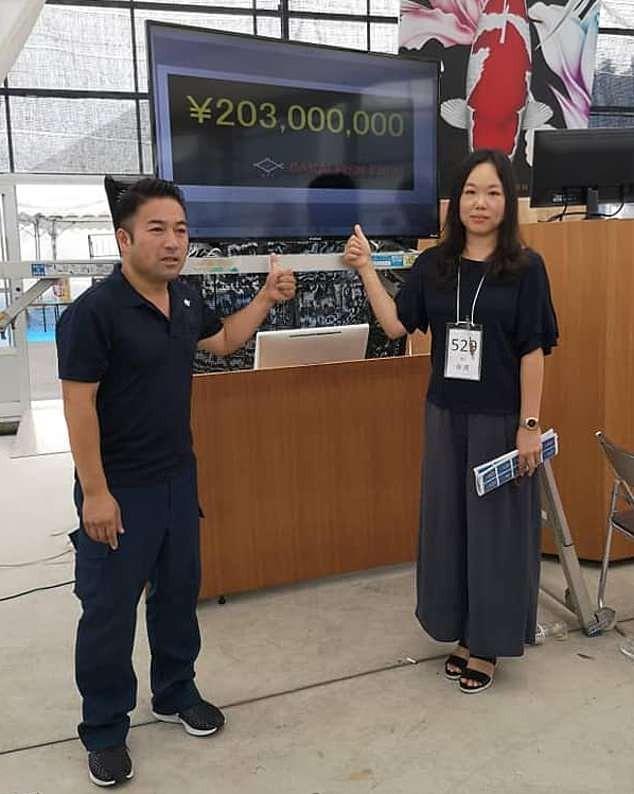 Cận cảnh chú cá Koi đắt nhất thế giới giá 42 tỷ đồng-2