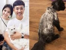 Vợ chồng Trấn Thành và chuyện gây cười về con mèo ngoại giá 3000 USD bị cạo trụi lông