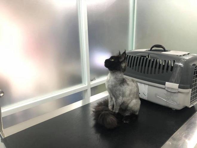 Vợ chồng Trấn Thành và chuyện gây cười về con mèo ngoại giá 3000 USD bị cạo trụi lông-5