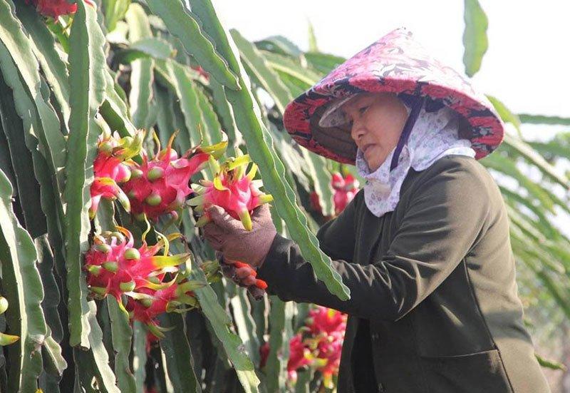 Trung Quốc quyết định đột ngột, vạn nông dân Việt khóc ròng-2
