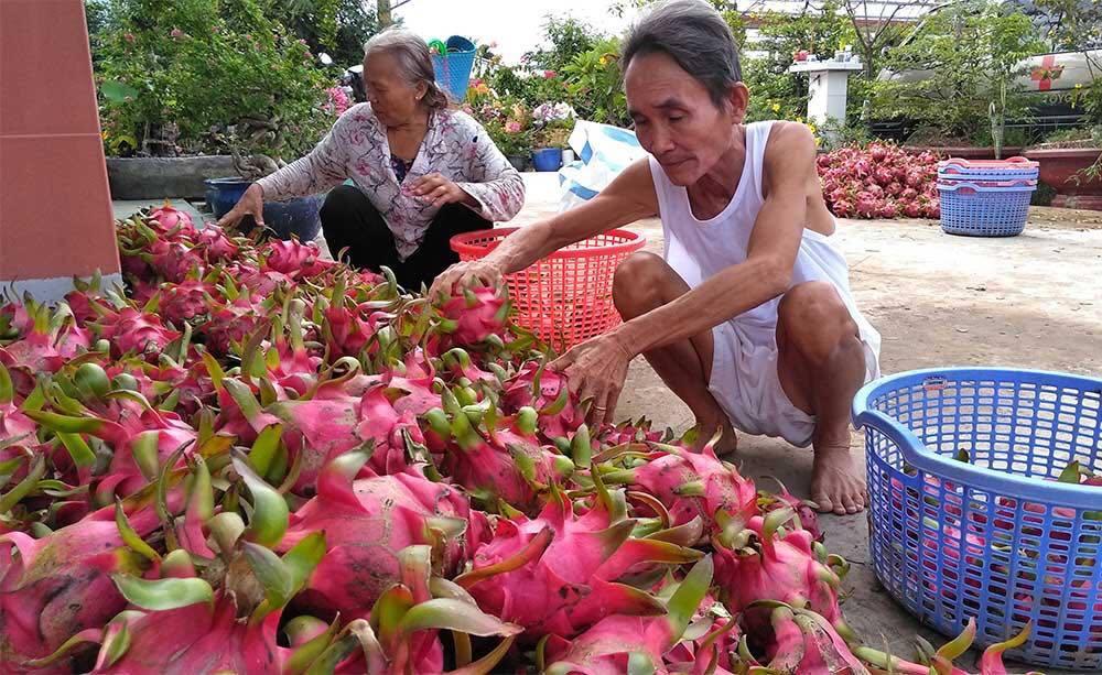 Trung Quốc quyết định đột ngột, vạn nông dân Việt khóc ròng-3