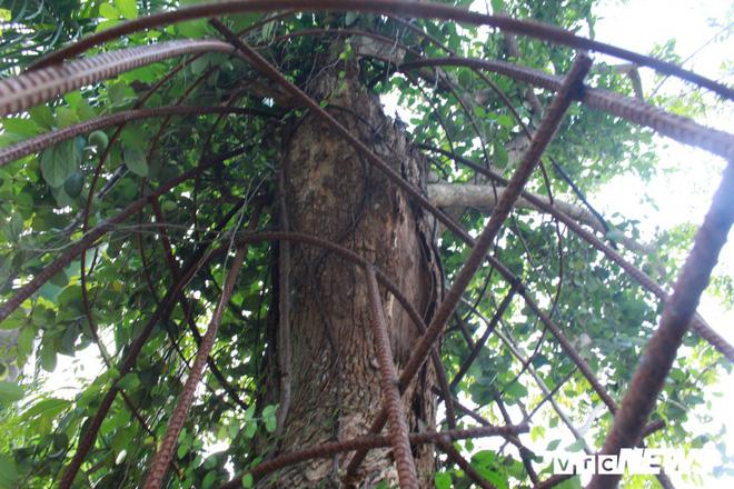 Ly kỳ quanh cây sưa trăm tỷ ở Hà Nội sắp được bán: Tờ giấy đe dọa ném vào nhà dân-2