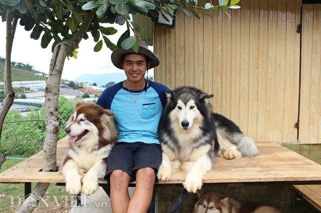 9X nuôi loài chó Tây to xác để khách chụp ảnh và thu trăm triệu/tháng-1