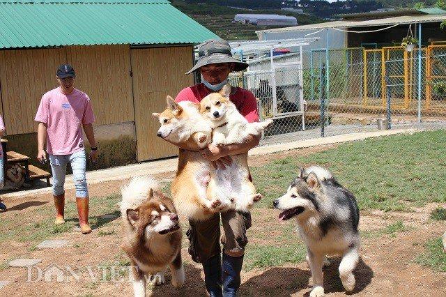 9X nuôi loài chó Tây to xác để khách chụp ảnh và thu trăm triệu/tháng-5