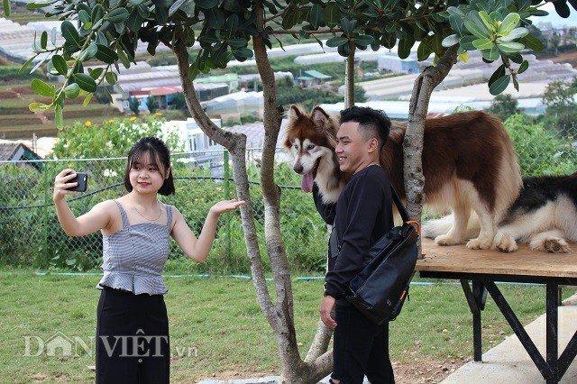 9X nuôi loài chó Tây to xác để khách chụp ảnh và thu trăm triệu/tháng-6