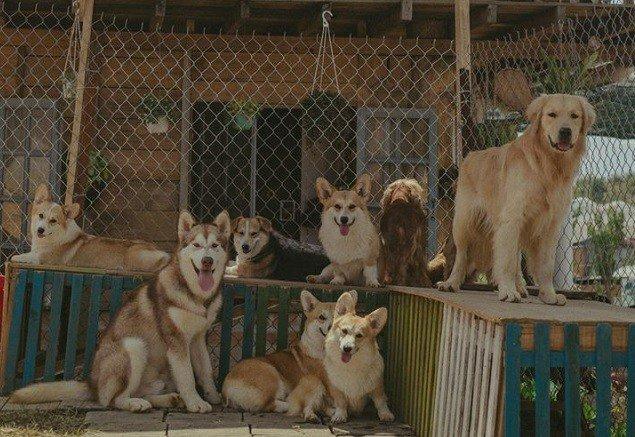 9X nuôi loài chó Tây to xác để khách chụp ảnh và thu trăm triệu/tháng-7