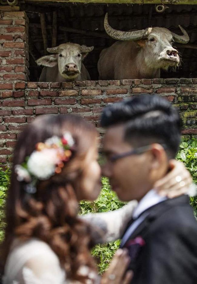 """Bức ảnh cưới đầy những chiếc sừng của người thợ ảnh thâm nho"""", chụp cô dâu mà nhìn vào chỉ thấy trâu-2"""