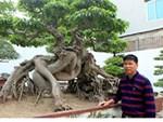 Cụ hoa giấy dáng siêu phàm, còi dí mà giá hơn 100 triệu đồng ở Nam Định-10