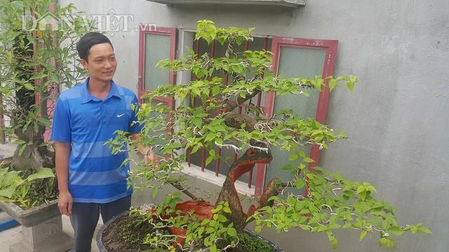 Cụ hoa giấy dáng siêu phàm, còi dí mà giá hơn 100 triệu đồng ở Nam Định-2