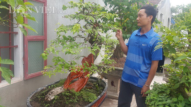 Cụ hoa giấy dáng siêu phàm, còi dí mà giá hơn 100 triệu đồng ở Nam Định-7