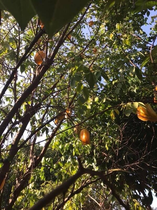 Soi nhà Quang Lê tại Mỹ: Nhìn bên ngoài tưởng miệt vườn vào trong mới biết là cung điện-3