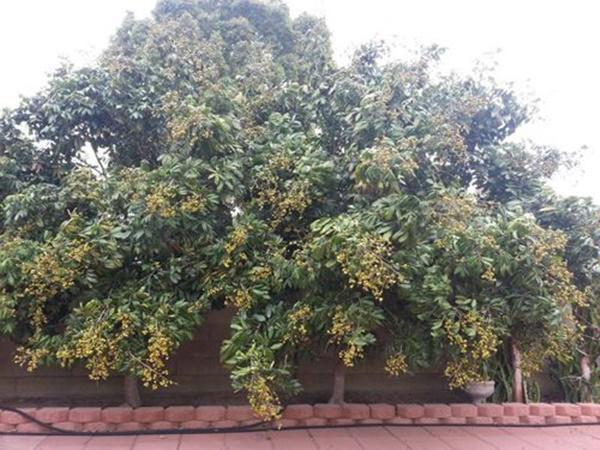 Soi nhà Quang Lê tại Mỹ: Nhìn bên ngoài tưởng miệt vườn vào trong mới biết là cung điện-4