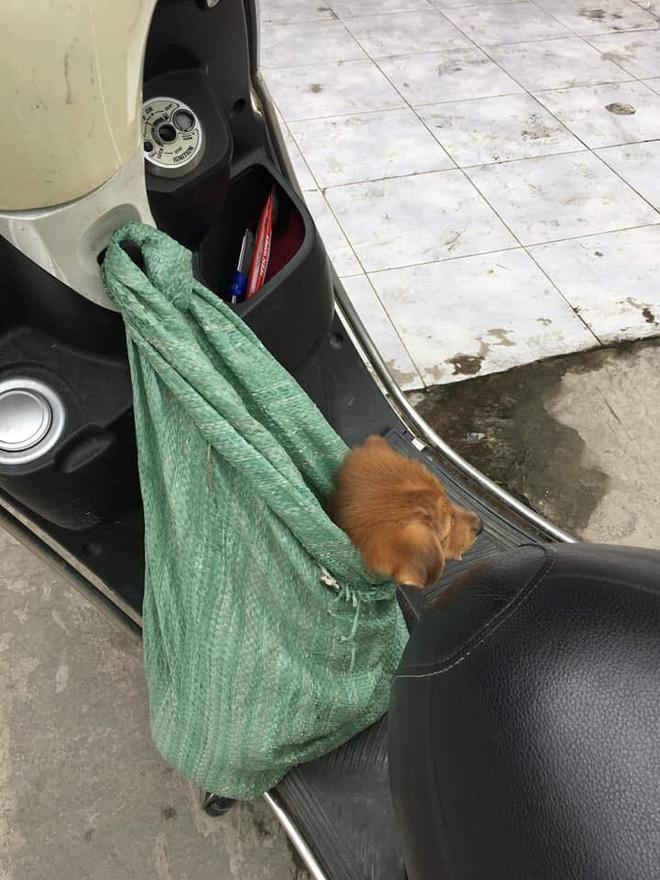 Nụ hôn từ biệt của cụ già và chú chó nhỏ: Câu chuyện không ai cầm được nước mắt giữa phố Sài Gòn-7