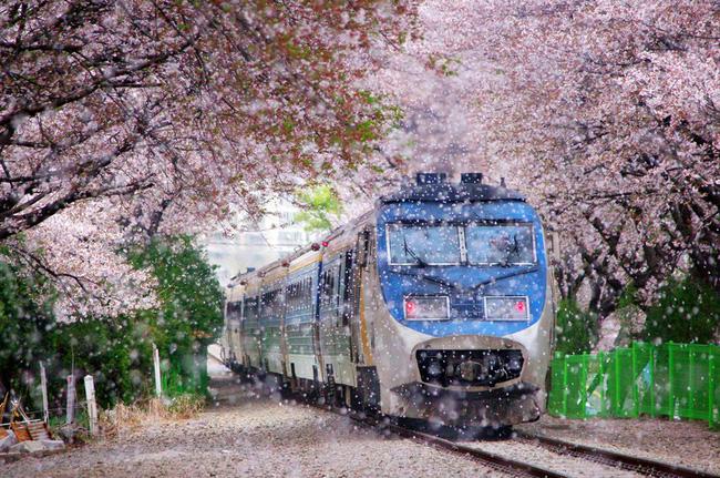 9 lưu ý cần nhớ kĩ để áp dụng khi đi du lịch Nhật Bản-1