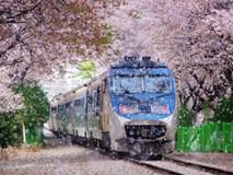 9 lưu ý cần nhớ kĩ để áp dụng khi đi du lịch Nhật Bản