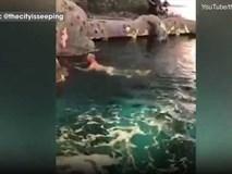Khỏa thân nhảy vào bể cá mập, người đàn ông bị cảnh sát truy lùng