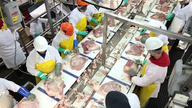 Nhân viên vô tư tè bậy cạnh dây chuyền sản xuất, nhà máy phải vứt bỏ gần 23 tấn thịt lợn-2
