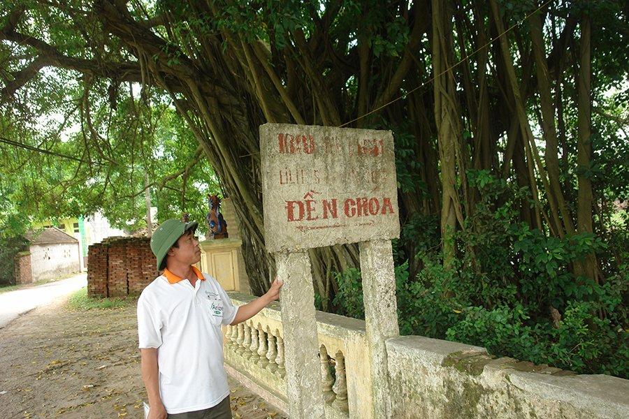 Ly kỳ cuộc chiến bảo vệ những gốc cây trị giá cả trăm tỷ đồng của các lão nông Việt-1