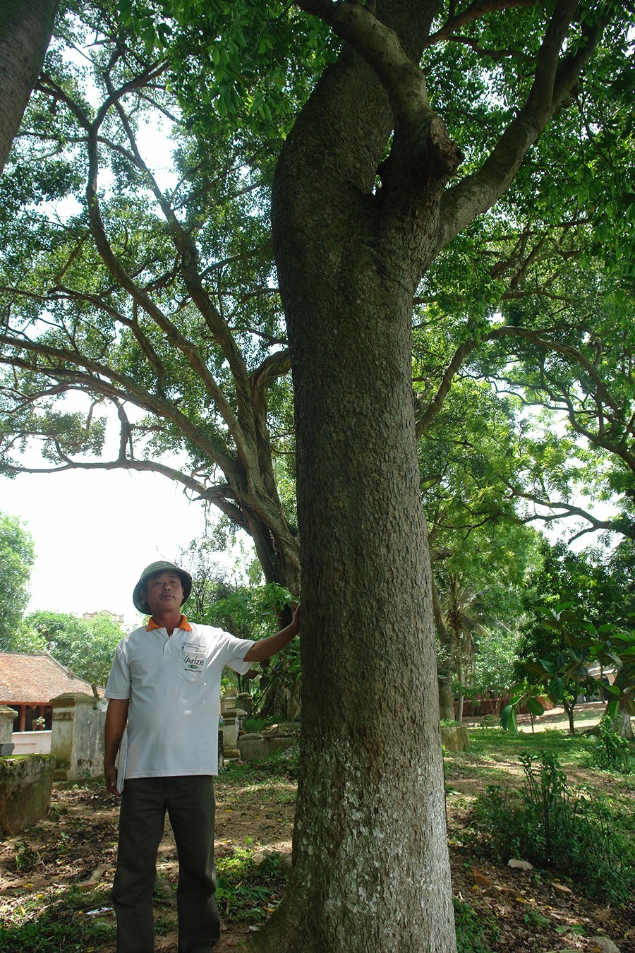 Ly kỳ cuộc chiến bảo vệ những gốc cây trị giá cả trăm tỷ đồng của các lão nông Việt-2