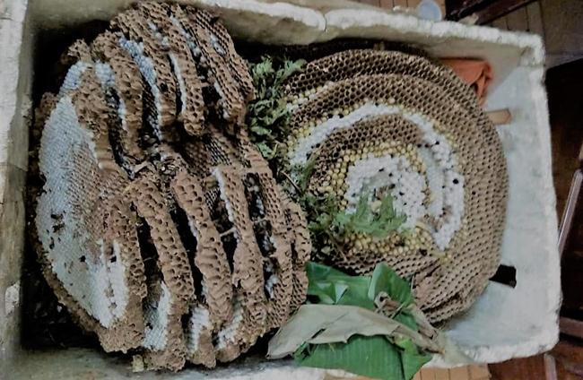"""Đi săn loài ong tử thần"""" vùng sơn cước, kiếm nửa triệu/kg-9"""