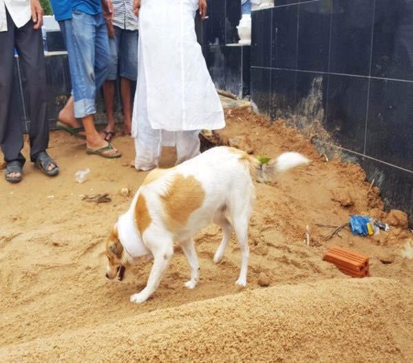 Câu chuyện uất hận về chú chó đang để tang bà chủ thì bị cẩu tặc bắt mất-2