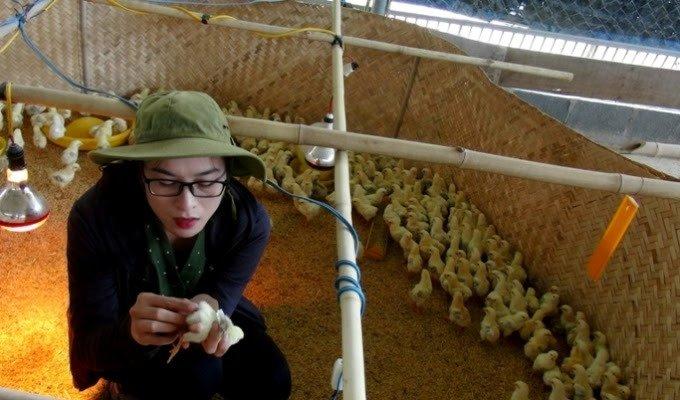 Nàng cử nhân 9X xinh đẹp nuôi gà bằng...nhạc giao hưởng Beethoven-2