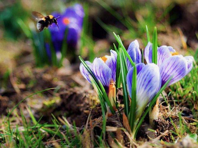 Nhìn giống hoa bèo tây nhưng nhụy của loài hoa này lên đến hàng trăm triệu-2