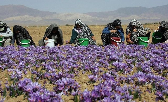 Nhìn giống hoa bèo tây nhưng nhụy của loài hoa này lên đến hàng trăm triệu-3