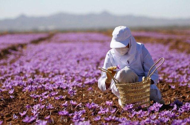 Nhìn giống hoa bèo tây nhưng nhụy của loài hoa này lên đến hàng trăm triệu-6