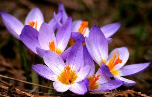 Nhìn giống hoa bèo tây nhưng nhụy của loài hoa này lên đến hàng trăm triệu-7