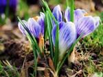 Bí mật thú vị của saffron - gia vị đắt nhất thế giới gần 1 tỷ/kg từng được Nữ hoàng Ai Cập dùng dưỡng nhan-9