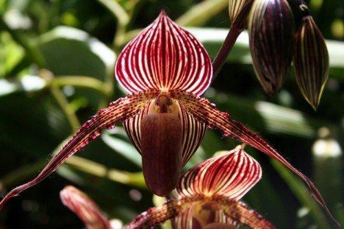 Loài hoa lan 15 năm mới nở một lần, 136 triệu đồng/cây-1