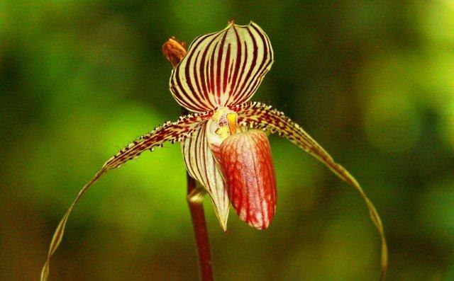 Loài hoa lan 15 năm mới nở một lần, 136 triệu đồng/cây-6