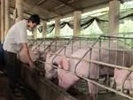 Trung Quốc khen thịt lợn Việt Nam ngon nhưng... không mua-2