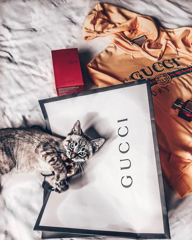 Bà mẹ lấy áo Gucci 7 triệu của con lót ổ mèo, xong đền 100k bảo ra chợ mua mới-4