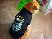 Bà mẹ lấy áo Gucci 7 triệu của con lót ổ mèo, xong đền 100k bảo ra chợ mua mới