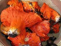 """Loại mốc đặc biệt có khả năng biến các cây nấm thành... """"thịt tôm hùm"""""""