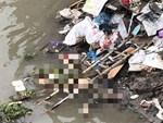 Công an kêu gọi tìm kiếm nhân chứng vụ thi thể trẻ sơ sinh bị heo rừng tha đi ở Sài Gòn-3