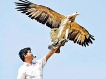 Cao thủ tiết lộ công phu thú chơi loài chim