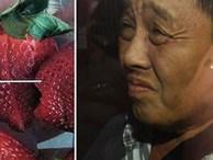 Vụ dâu tây kim khâu: Tòa kịch liệt phản đối đơn bảo lãnh vì lo ngại nghi phạm gốc Việt bị 'trả thù'